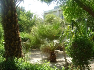 Another shot of the Garden of Banu Sa'edah