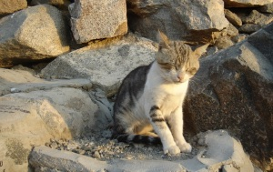 A kitten on the mountainside - He seemed to be sleeping, yet he sat up